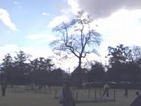 境内の芝生広場
