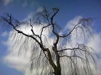 お宮さんの木