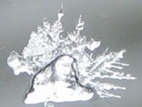 フロントガラスの雪